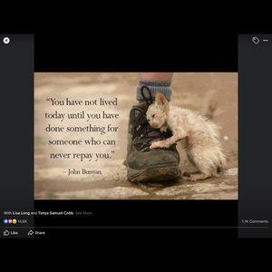 HELP HOMELESS CATS